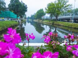 Kanal Blumen Wasser Groningen Niederlande