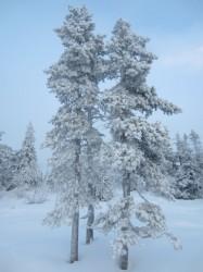 Die winterliche Landschaft sah traumhaft aus.