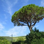 Ein schöner Baum in der Toskana