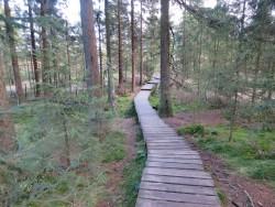 Teile der Wanderwege rund um Torfhaus verlaufen über Holzplanken