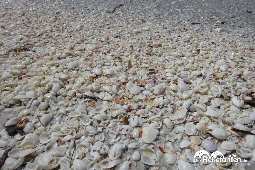 Zahlreiche Muscheln werden an den Strand von Sanibel Island gespült
