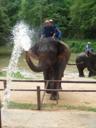 Über ihren Rüssel können die Elefanten bis zu 8 Liter Wasser aufnehmen