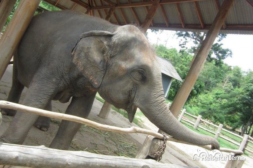 Elefanten haben nicht nur ein gutes Gedächtnis, sondern sind auch sehr verspielt