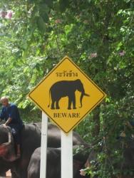 Vor Elefanten braucht man eigentlich keine Angst haben