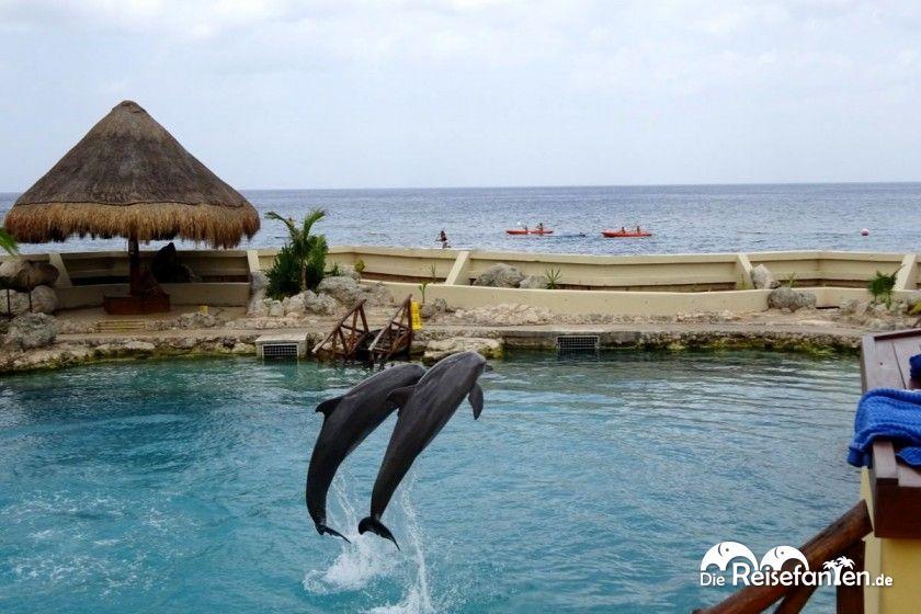 Delphine im Dolphinaris auf Cozumel