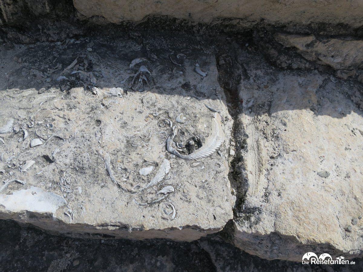 Die Stufen der Pyramide zeugen von den Zeiten, als Cozumel noch unter Wasser lag