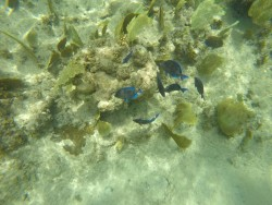 Schnorcheln am Govenors Beach auf Grand Cayman