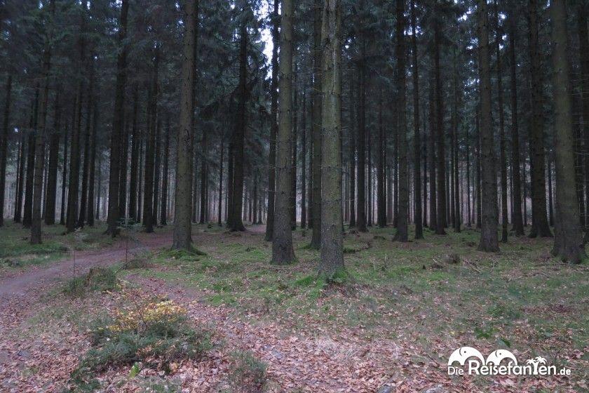 Dichter Wald auf dem Heidschnuckenweg