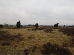 Heidelandschaft soweit das Auge reicht auf dem Heidschnuckenweg
