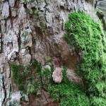 Auf dem Weg zur Staumauer haben wir auch diesen schönen Baum entdeckt