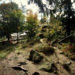 Auch im Harz waren wir wieder unterwegs.