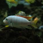 Auch die Unterwasserwelt kommt im Luisenpark Mannheim nicht zu kurz