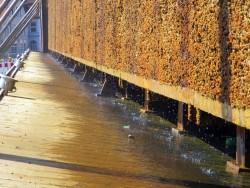 Herabrieselndes Wasser an den Schwarzdornballen in Bad Salzuflen