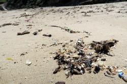 Angespülter Müll am Strand von Lu Bagnu auf Sardinien