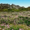 Im Frühling ist Sardinien besonders bunt