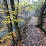 Der Wanderweg im Bodetal im Harz