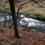 Die Bode fließt teils sehr kräftig im Bodetal im Harz