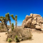 Im Joshua Tree National Park in den USA