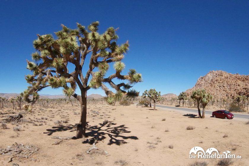 Interaktive Ansicht aus dem Joshua Tree Nationalpark im Westen der USA