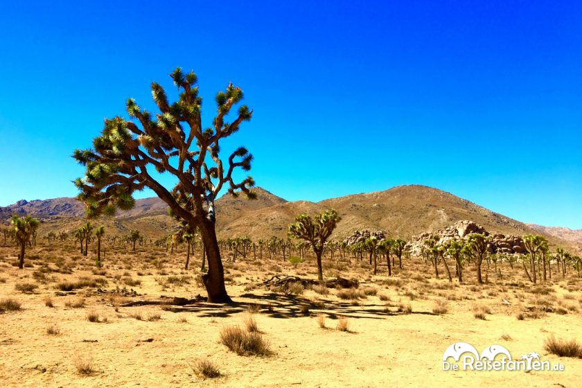 Weite Natur im Joshua Tree Nationalpark