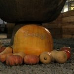 An Halloween gab's auf dem Googleplex im Silicon Valley auch Kürbisse