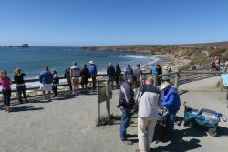 See Elefanten am Elephant Seal Viewing Point