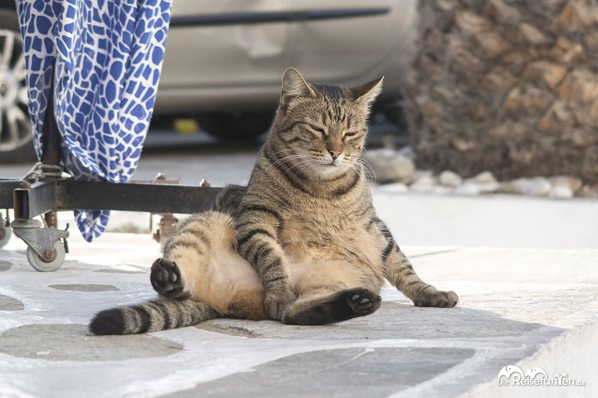 Eine Katze ruht sich lässig in Mykonos aus