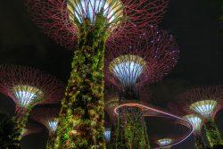 Der Gardens by the Bay in Singapur ist allabendlich beleuchtet
