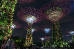 Kostenloser Publikumsmagnet ist der Gardens by the Bay in Singapur