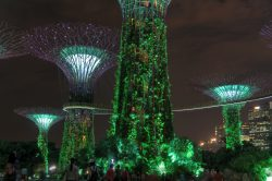Lichtschauspiel im Gardens by the Bay in Singapur