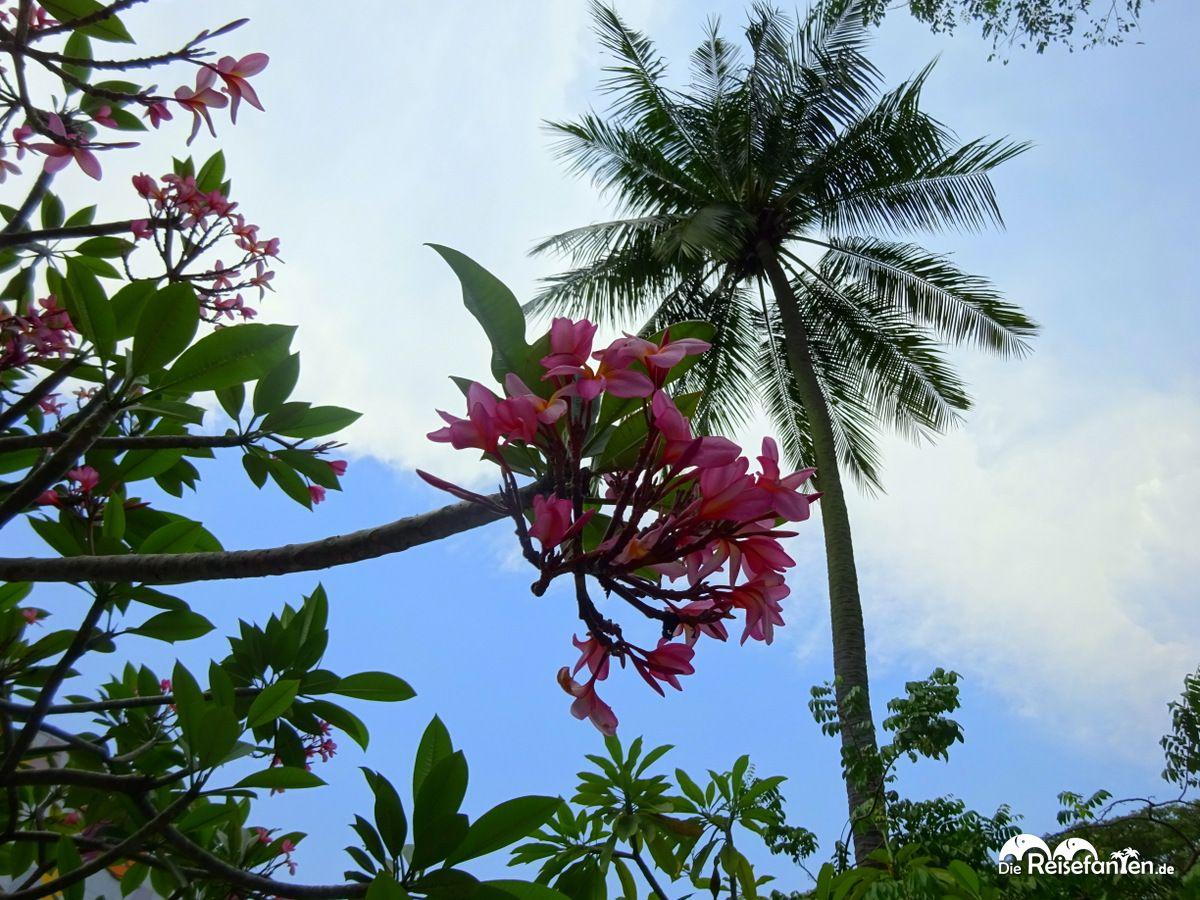 Tropische Pflanzen auf Sentosa in Singapur