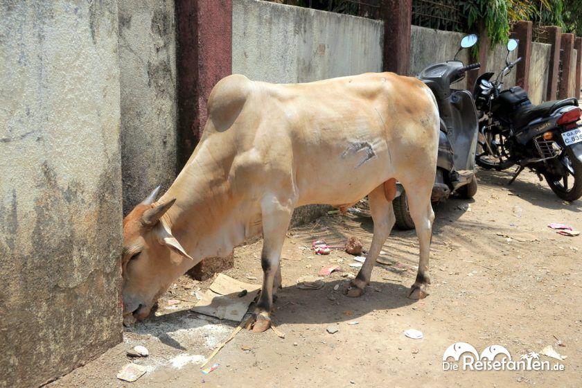 Eine Kuh am Straßenrand in Indien