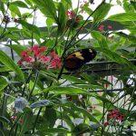Schmetterlinge im Botanischen Garten des Malahide Castles