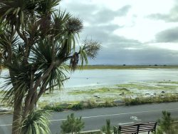 Palmen auf der irischen Halbinsel Howth