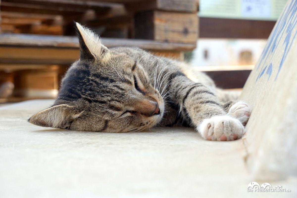 Auch die Katzen ruhen sich aus in Therma auf Ikaria