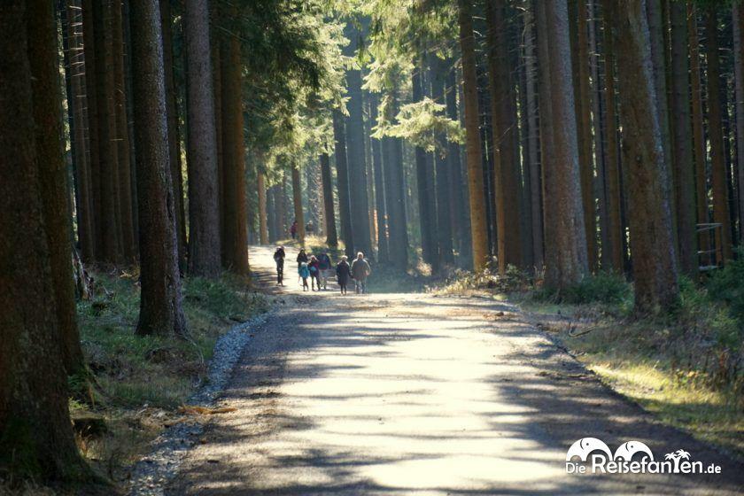 Direkter Einstieg in den Nationalpark Harz bietet das Relaxa Hotel Harz Wald