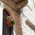 Blumen am Gebäude in Trogir