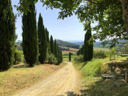 Auf dem Gelände der Fattoria Voltrona San Gimignano