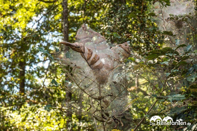 Spinnenweben nahe den Windsor Ruins am Mississippi