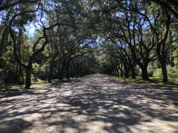 Dichte Allee auf der Wormsloe Plantation in Savannah