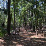 Unterschiedliche Vegetation auf der Wormsloe Plantation in Savannah
