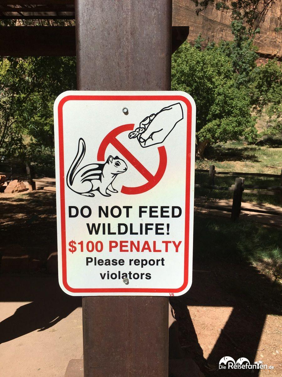 Auch das Füttern von Grauhörnchen ist in diesem Park verboten