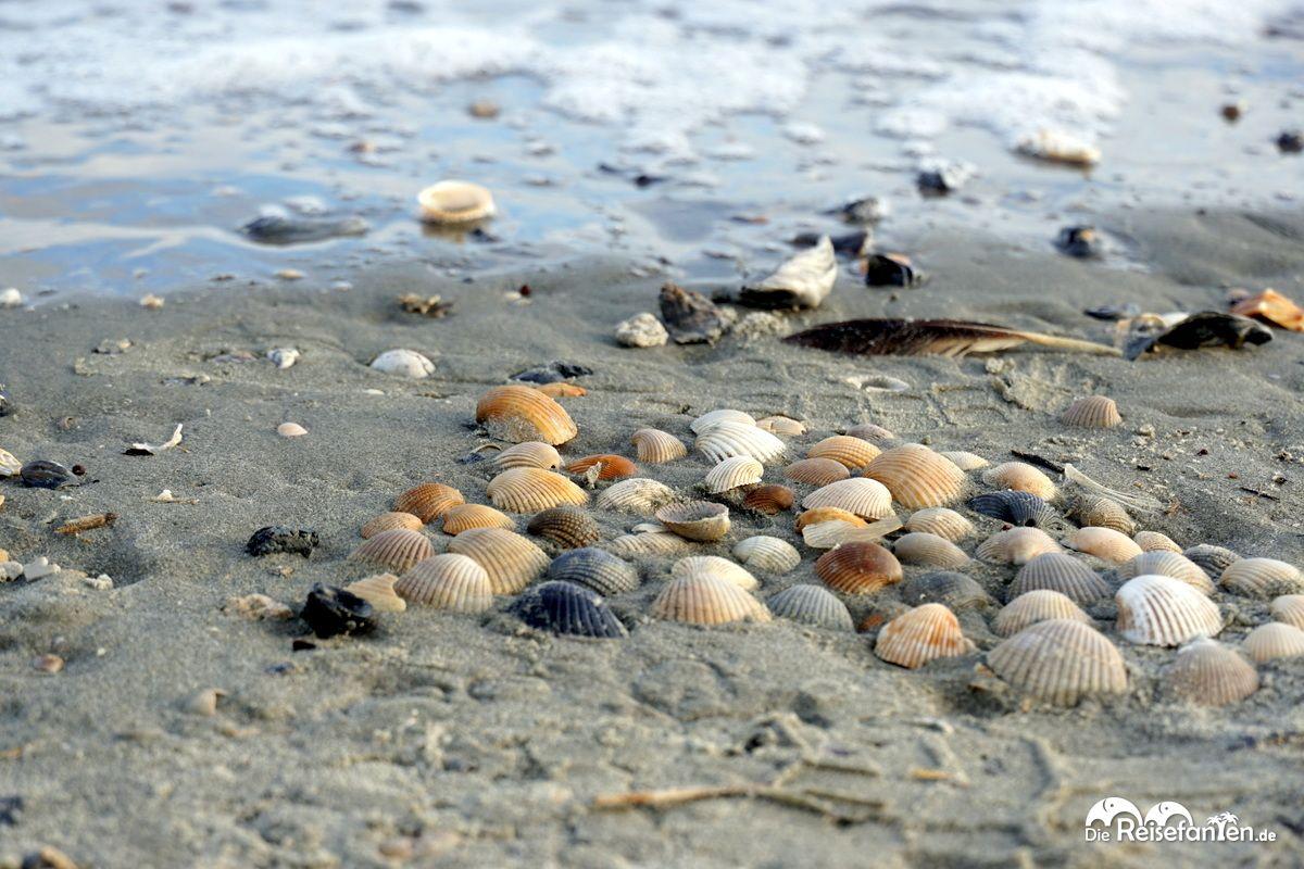 Muscheln am Strand von Sullivan's Island