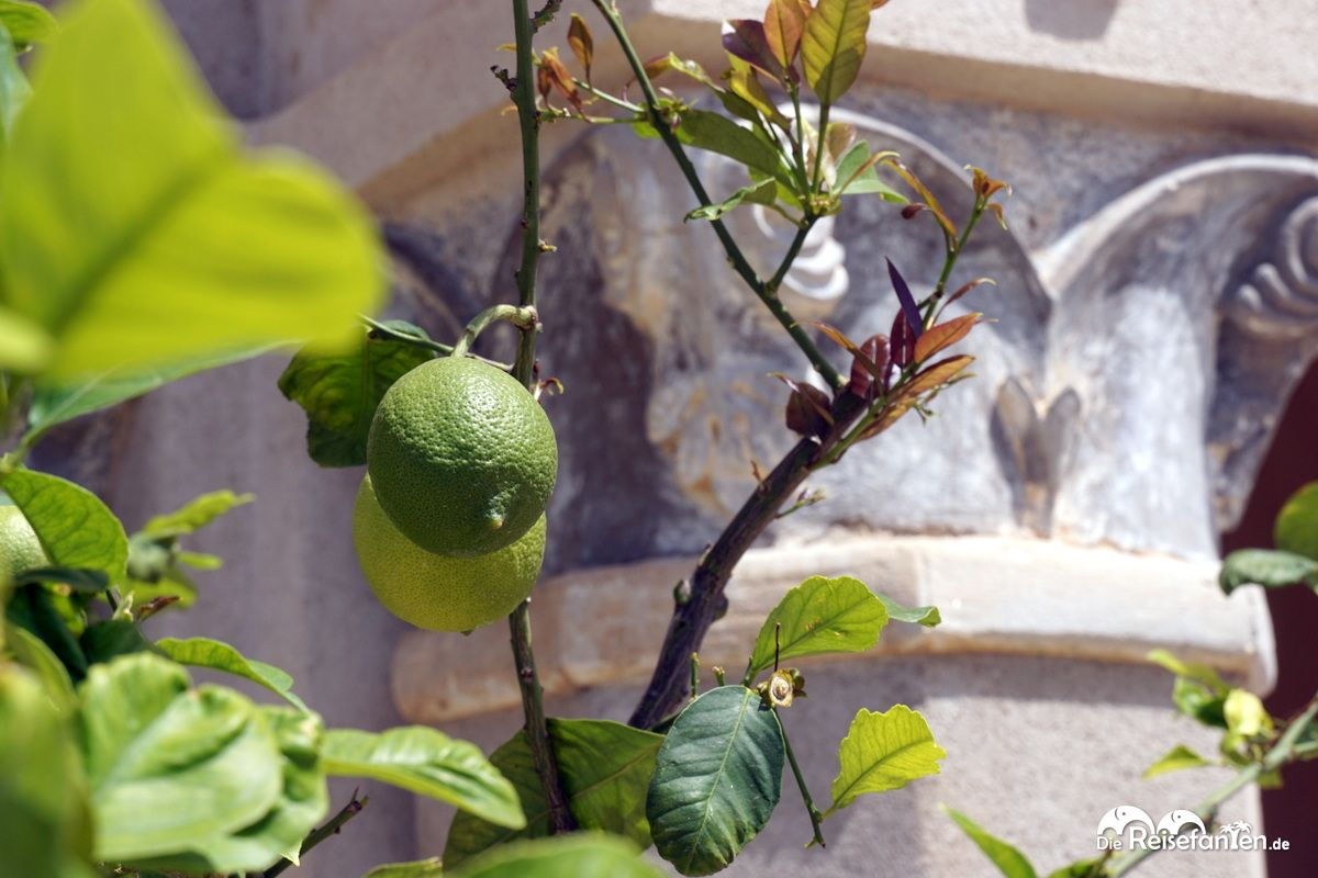 Zitrusfrüchte an der Wallfahrtskirche Santa Maria dell'Isola
