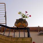 Blumenkasten im italienischen Scilla