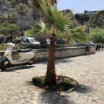 Palme in Tropea