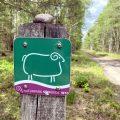 Wanderweg W10 in der Lüdeburger Heide