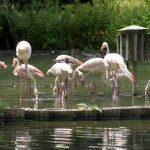 Auch Flamingos gibt es im Luisenpark Mannheim