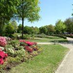 Ausnahmesweise mal eine Stelle mit wenig Blüten im Rhododendronpark in Bremen