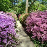 Blütengang im Rhododendronpark in Bremen